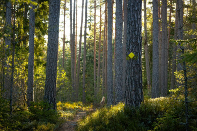 Explore the nature trails of the archipelago
